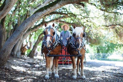 Woah Farm Horses