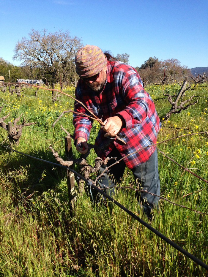 Phil Pruning 1