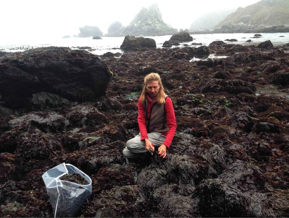 Kelp Heidi web