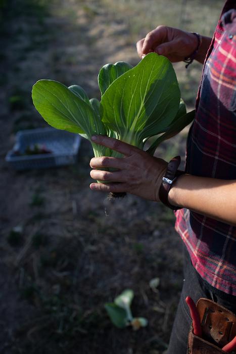 Radical Family Farms A Farm With Heart Made Local Magazine